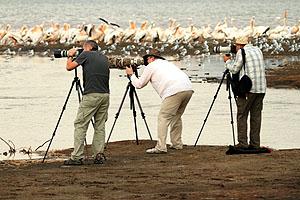 Gazella Fotoğraf Turları Başlıyor