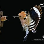 Sony Dünya Fotoğraf Ödülleri'nde bir ilk