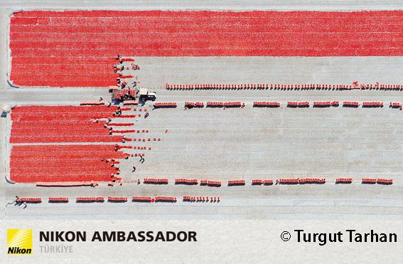 TTT 4339 1 - Doğa ve kentsel peyzajın ustası: Turgut Tarhan