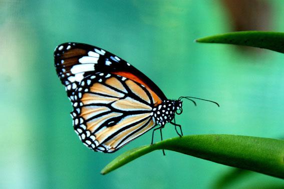 071129GD104k - Kelebek Fotoğrafçılığı