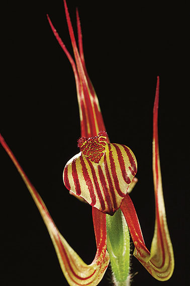 gece1 - 5 Adımda Göz Alıcı Çiçek Fotoğrafları