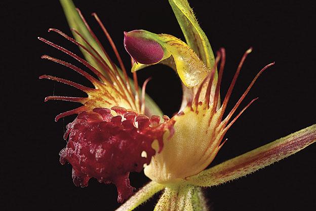gece2 - 5 Adımda Göz Alıcı Çiçek Fotoğrafları