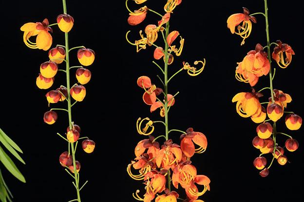 gece3 - 5 Adımda Göz Alıcı Çiçek Fotoğrafları