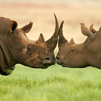 Kenya'da foto-safariye var mısınız?