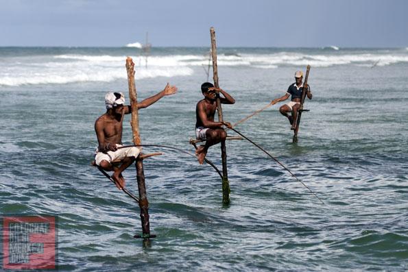 Sri Lanka'da Fotosafari