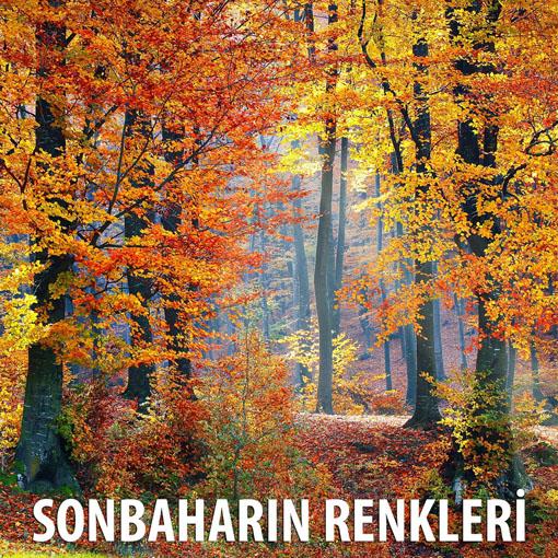 """""""Sonbaharın Renkleri"""" fotoğraf yarışması sonuçlandı"""