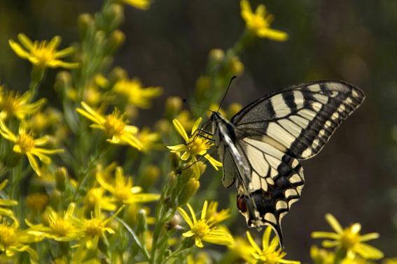 Kelebek Fotoğrafçılığı