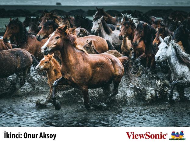 ikinci - ViewSonic Türkiye fotoğraf yarışması sonuçlandı