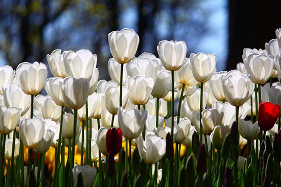 010 zeynep bayrak IMG 5146 - Sizin Fotoğraflarınız - 3