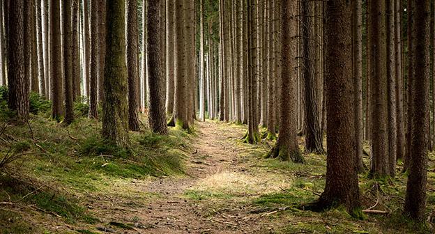 forestry manset - Kaspersky Lab Türkiye Instagram Yarışması