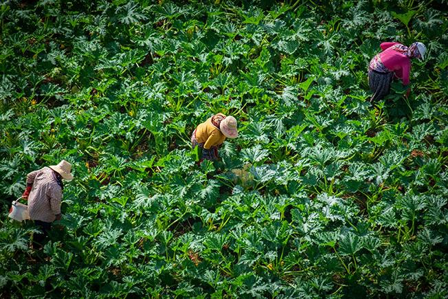 selva bal - Sizin Fotoğraflarınız – 7